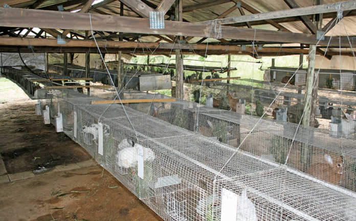 rabbit farming business plan pdf south africa